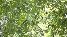 Green Leaves On Branches stock video footage