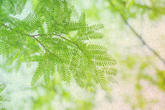 Green leaves and branches pastel tone color Stock Photos