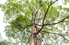 Green leaves and branches Royalty Free Stock Image