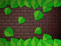 Green leaves and brick wall Stock Photo
