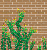 Green leaves on the brick wall Stock Photo