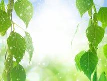 Green leaves, bright light Stock Image