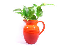 Green leaves in the bright red vase isolated on white background Royalty Free Stock Photography