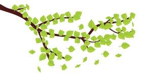 Green leaves on brunch. Illustration of fresh green leaves on brunch on white background Stock Photo
