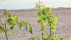 Green leaves on a bush against the background of the sea shore. Bright green leaves on a bush against the background of the sea shore stock video footage