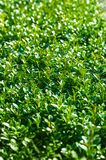 Green leaves of bushes stock photos