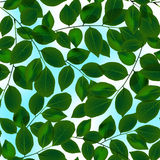 Green leaves canopy and sky in a seamless pattern.  Royalty Free Stock Photography