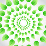 Green leaves circular illustration Stock Photo