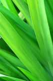 Green leaves close up Royalty Free Stock Photos