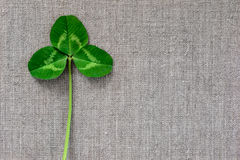 Green leaves of clover on the background of linen cloth. Stock Image
