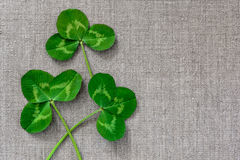 Green leaves of clover on the background of linen cloth. Royalty Free Stock Photos