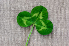 Green leaves of clover on the background of linen cloth. Stock Photos