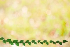 Green leaves of Coatbuttons nature border and blur yellow bokeh. Background, ficus, pumila, tridax, procumbens, abstract, aged, architecture, backdrop, beauty stock photos