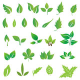 Green leaves. Collection of green leaves illustration vector illustration