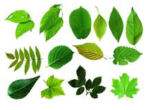 Green Leaves Collection Royalty Free Stock Images