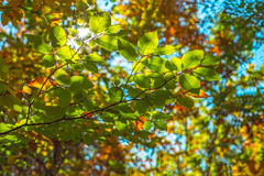 Green leaves and color backgrounds Stock Image