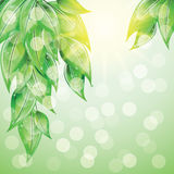 Green leaves on colorful background. Green leaves on colorful background at sunset. Vector illustration Royalty Free Stock Photo
