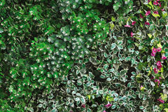 Green  leaves and colorful flowers background. Green leaves and colorful flowers background Royalty Free Stock Photo