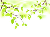 Green leaves with copy space Royalty Free Stock Photo