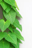 Green leaves with copyspace Stock Photography
