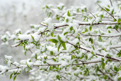 Snowy Spring Royalty Free Stock Photos