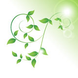 Green leaves curls Royalty Free Stock Images