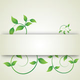 Green leaves curls Royalty Free Stock Image