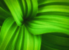 Green leaves with curvy lines Stock Images