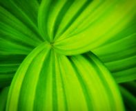 Green leaves with curvy lines Royalty Free Stock Photo