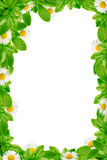 Green leaves and daisies frame Royalty Free Stock Image
