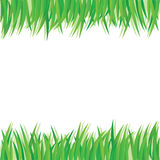 Green leaves design elements. This image is a vector illustration. grass on white background Stock Photo