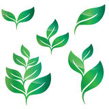 Green leaves design elements Royalty Free Stock Photos