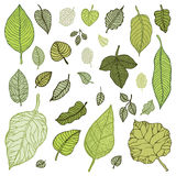 Green leaves set.  Vector Illustration. Stock Photo