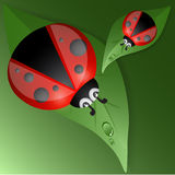 Green leaves design with ladybug Stock Photography