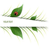 Green leaves design with ladybug Stock Images