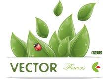Green leaves design with ladybug Stock Image