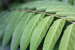 Green leaves detail 2 Stock Image