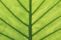 Green leaves details symmetric Stock Photography