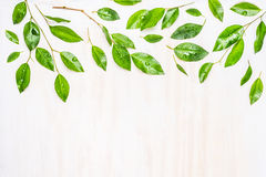 Green leaves with dew drops ,  border or pattern on white wooden background, top view. Royalty Free Stock Photography
