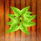 Green leaves with dew drops and ladybugs Royalty Free Stock Image