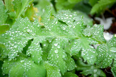 Green leaves with dew Stock Photo