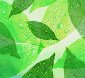 Green leaves with dew. Green leaves wet with dew drops forming abstract background Royalty Free Stock Photography