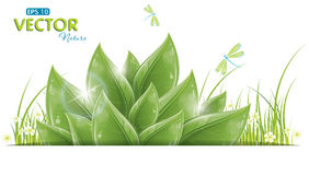 Green leaves and dragonfly isolated on white Stock Photography