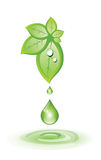 Green leaves and droplet Stock Photo