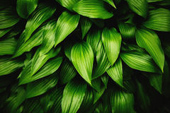 Green leaves dynamic background Royalty Free Stock Photography