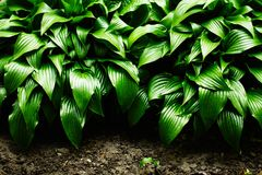 Green leaves dynamic background Royalty Free Stock Image