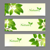 Green leaves eco banners set Royalty Free Stock Photography