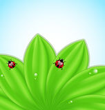 Green leaves ecology fresh background. Illustration green leaves ecology fresh background  -vector Royalty Free Stock Images