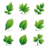 green leaves element Stock Images