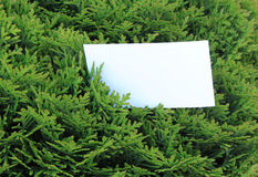 Green leaves with empty card Royalty Free Stock Photos